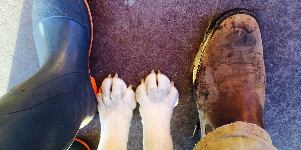 Looking down on one of Kelly's feet, one of Tim's feet, and both of Riley's front paws.