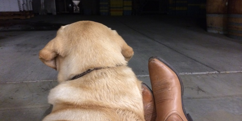 Kelly's feet in cowboy boots with Riley the yellow lab laying against her legs, looking away from the camera.