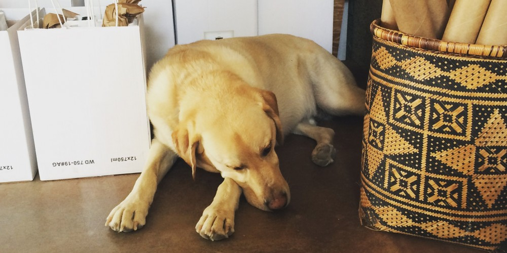 Riley the yellow lab napping under the cash register table, surrounded by cases of wine.